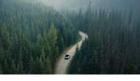 Jensen Video Vorschaubild Wald Auto